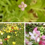 Le printemps d'éco-créateurs en poésie