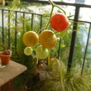 Jardin urbain, jardin de balcon et jardin en pot