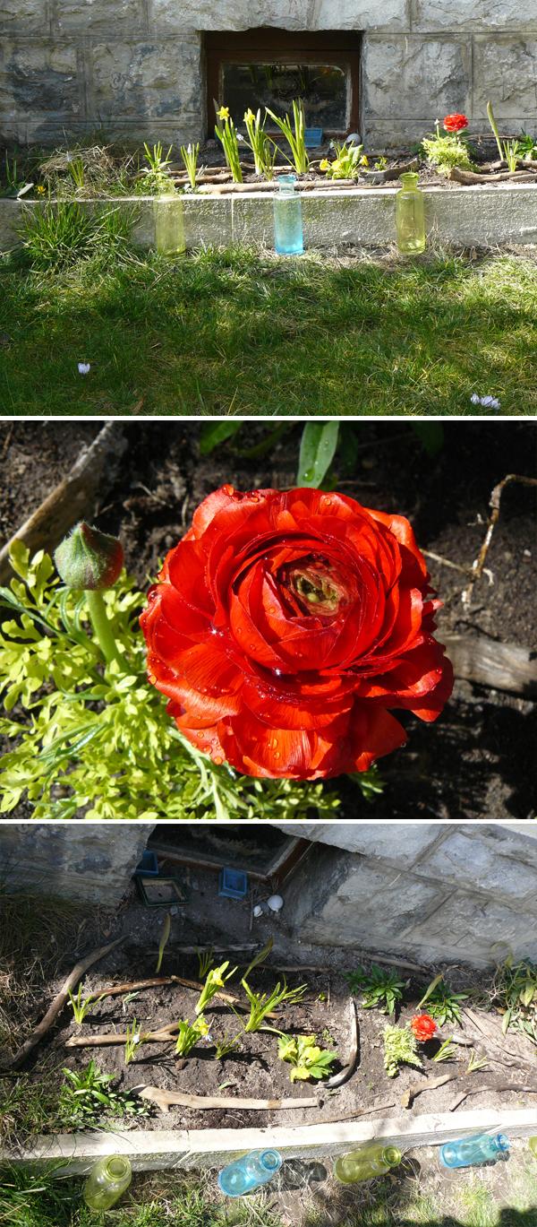 jardinière-de-printemps