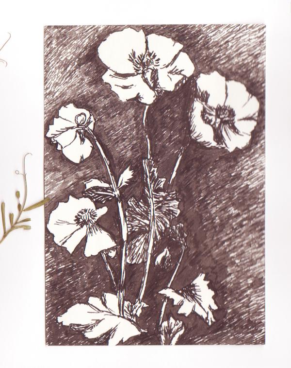 les-plantes-dépolluantes-2