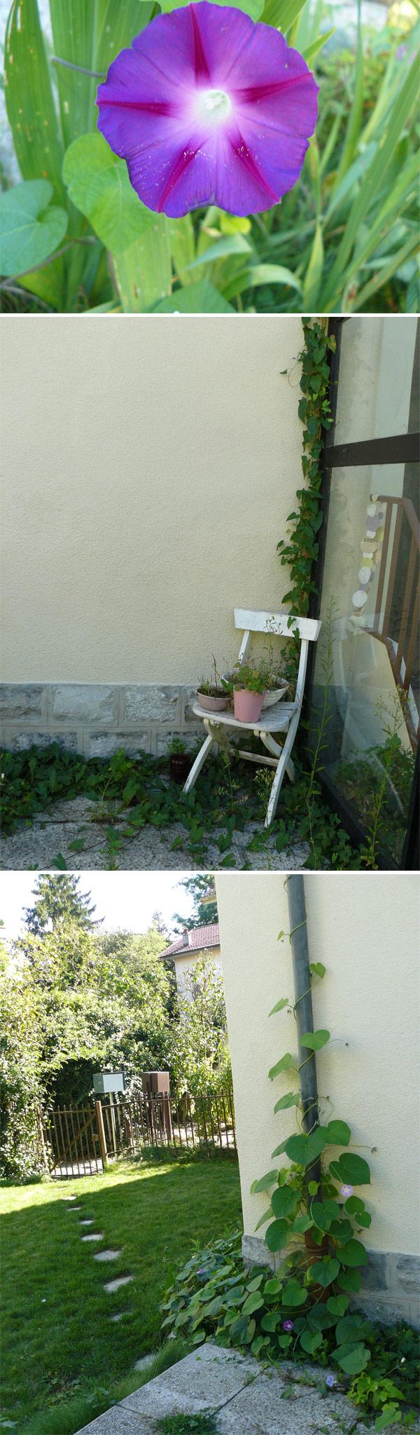 mon-jardin-de-fin-d'été-2