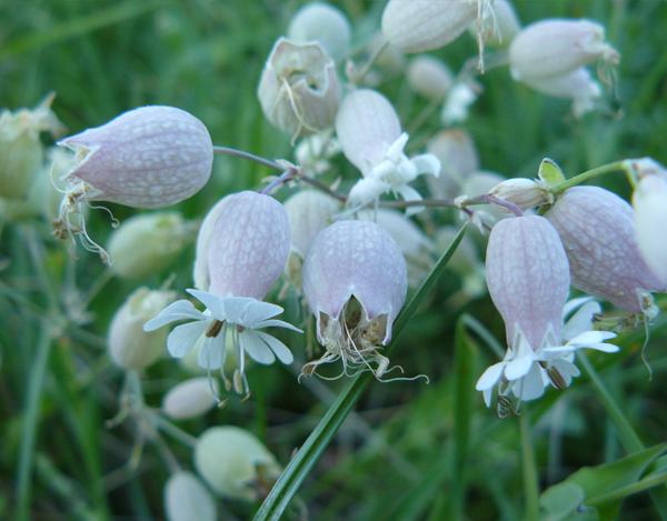 Balade-de-fin-d'été-confiture-de-mûres-et-bouquet-sauvage