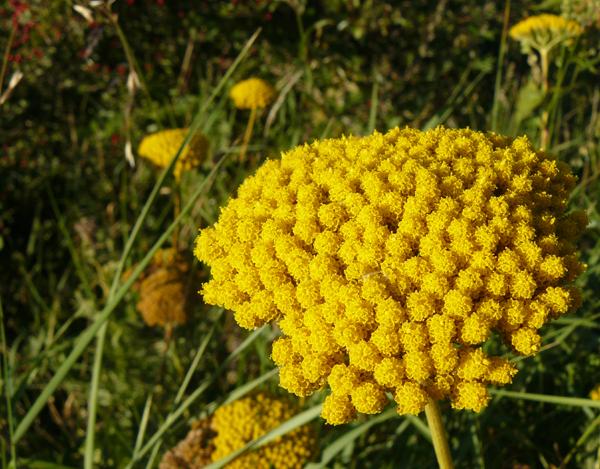 Balade-de-fin-d'été-confiture-de-mûres-et-bouquet-sauvage3