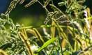 Balade de fin d'été : confiture de mûres et bouquet sauvage