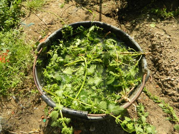 DIY  comment fabriquer de l'engrais avec des orties ou de l'herbe