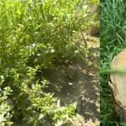 DIY : comment fabriquer de l'engrais avec des orties ou de l'herbe ?