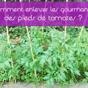 Comment faire en sorte que nos tomates produisent plus ?