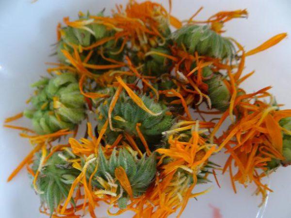 fleurs-de-soucis-1